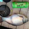 【ワカサギ釣り2013】爆釣求めてしのつ湖南地区へ行くと…すごいのが釣れた!